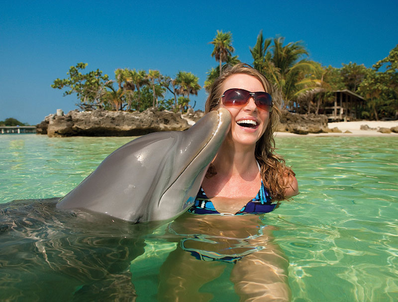 dolphins-st-lucia